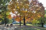 Cinningham Park #6